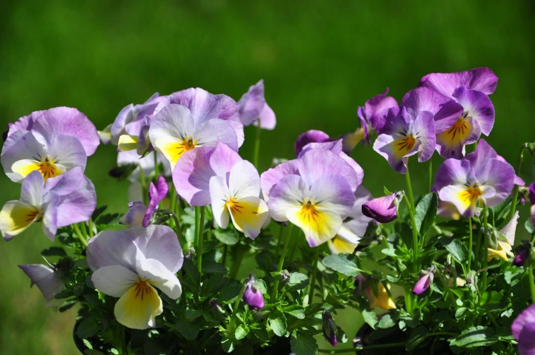 fleurs de saison p pini re lehmann sa p pini re march aux plantes. Black Bedroom Furniture Sets. Home Design Ideas